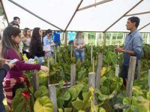 Estudantes da Uenf visitam produção de flores em Friburgo