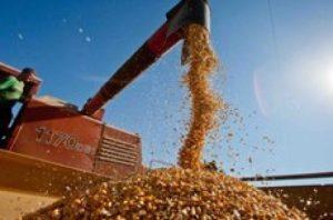 Brasil será maior exportador de alimentos do mundo na próxima década, aponta ONU
