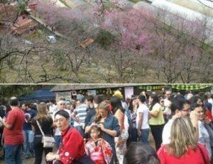 Festa da Cerejeira em Nova Friburgo é cancelada por falta de água