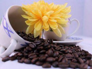 Bom Jardim realiza 6º Festa da Flor & Café em Setembro