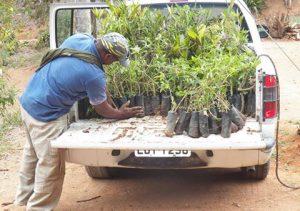INEA doa 1600 mudas para projeto ambiental de Cordeiro