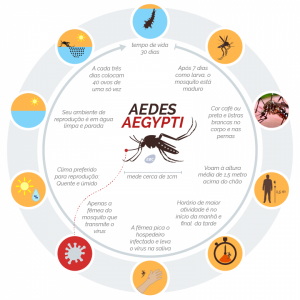 Diferença entre dengue, Zika e chikungunya é sutil, diz especialista