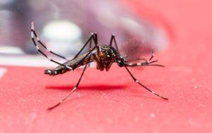 Lugares em que o Aedes aegypti se 'esconde' e você não sabe