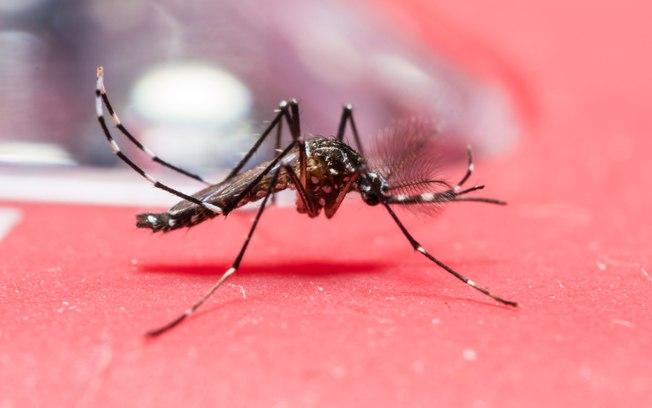 Transmissão de doenças do Aedes aegypti começa a cair, diz Ministério da Saúde