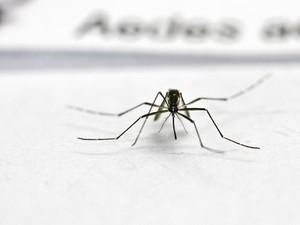 Casos de dengue em Nova Friburgo, sobem para 1.169