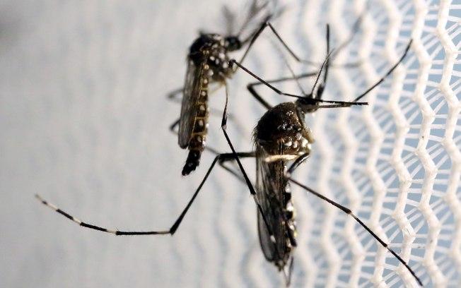Cientistas estudam possibilidade de transmissão do zika vírus por sexo oral