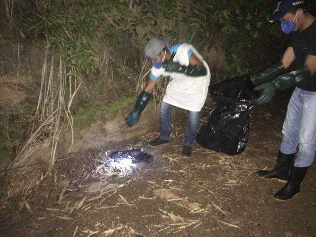 Dois macacos são encontrados mortos em São Sebastião do Alto