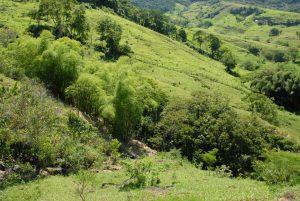Rio Rural alcança a meta de 2.016 nascentes protegidas