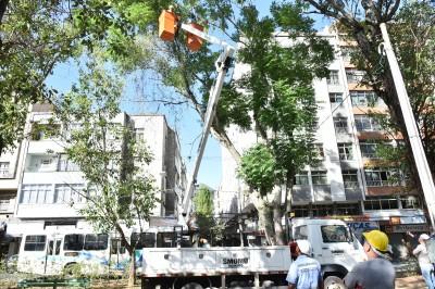 Prefeitura de Nova Friburgo inicia processo de podas emergenciais na Praça Getúlio Vargas