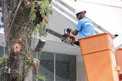 Eucaliptos da Praça Getúlio Vargas têm nova poda emergencial