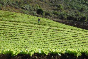 Christino destina R$ 13,3 milhões para desenvolvimento da agropecuária no Estado