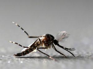 Friburgo, tem mais de 5 mil casos de dengue confirmados em 11 meses